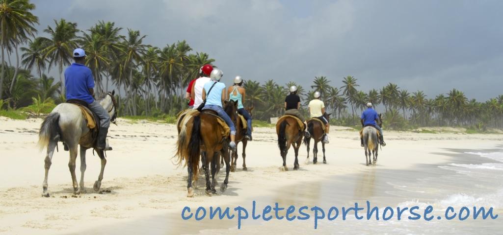 Completesporthorse