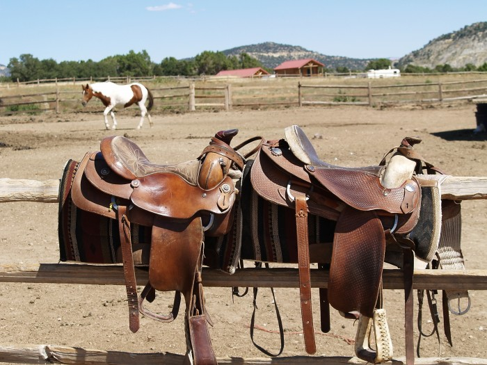 The right equipment for your horse